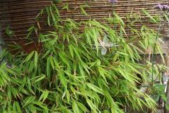 Tuinconnector verscholen in het groen.